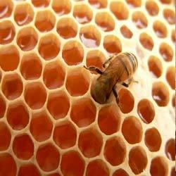 bee on top of a comb of honey