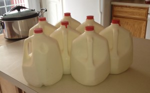 7 gallons of raw cow's milk